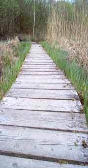 Camargue wooden path