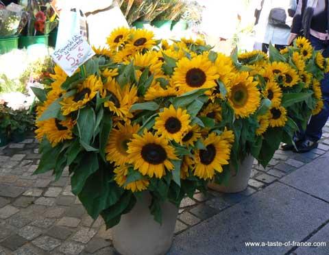 Concarneau market sunflowers