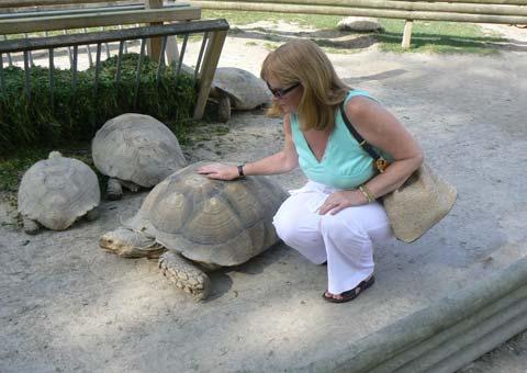 Alligator Bay tortoises Manche  Normandy