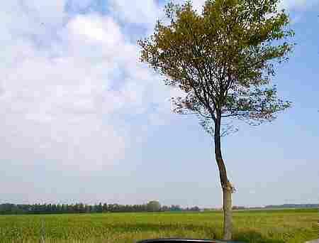 Azincourt battlefield 1415