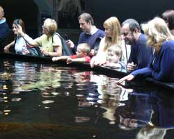 Boulogne sealife centre picture