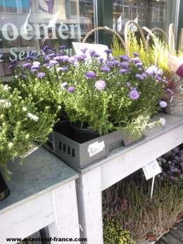 Flower shop Holland