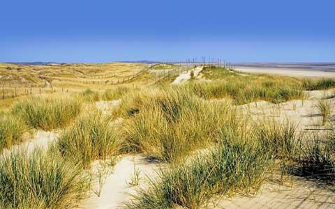 Le Touquet sand dunes picture