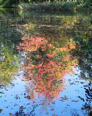 Monet`s garden picture