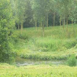 montcavrel river picture