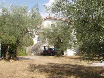 The villa set among the olive trees