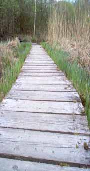 Camargue wooden path