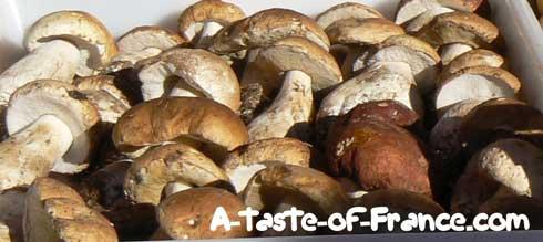 Concarneau market mushrooms  Brittany