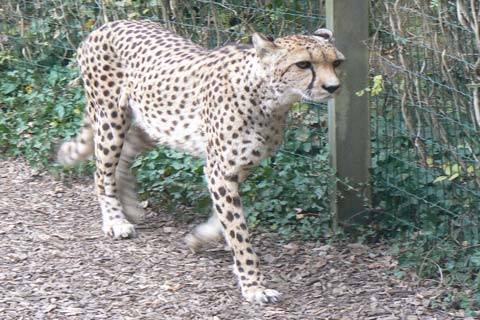Champrepus Zoo Manche Normandy