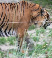 Champrepus Zoo