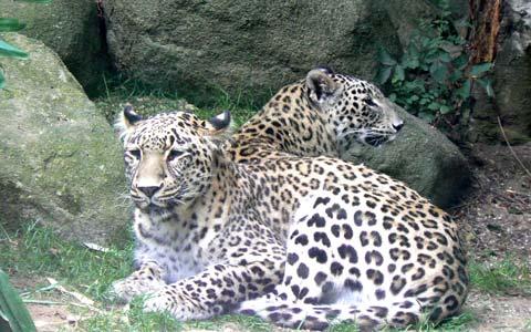 Champrepus Zoo Normandy