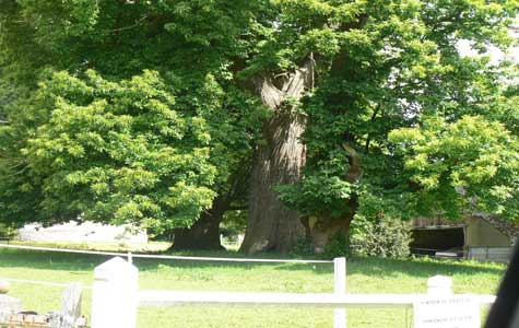 Chateau de filieres tree Normandy
