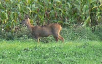 deer france picture